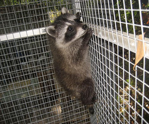 Wildlife Removal Oakville