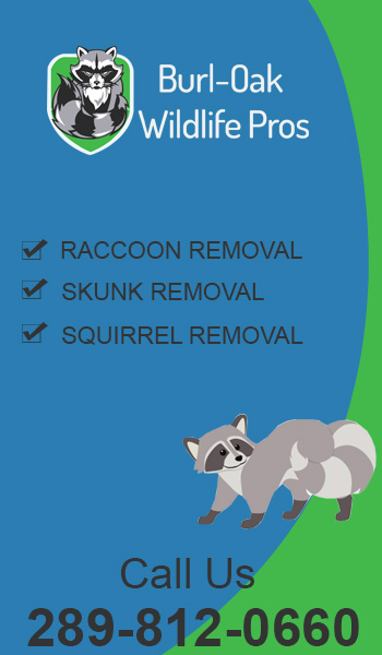 Wildlife Removal Burlington